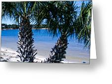 Palm Trees Of Gulf Breeze Greeting Card
