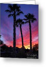 Palm Trees Sunset Greeting Card