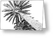 Palm Tree White Greeting Card