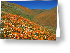Palmdale Poppies Greeting Card