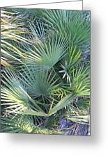 Palmettos Greeting Card