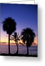 Palms At Sunrise Greeting Card