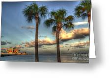 Palms At The Pier Greeting Card