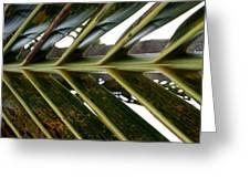 Palms E  Greeting Card