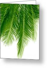 Palms Green Greeting Card by Boon Mee