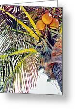 Palms Greeting Card