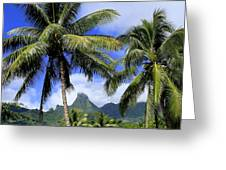 Palms In Morrea Greeting Card