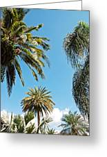 Palms In The Sky Greeting Card