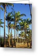 Palms On Hawaii Beach Trail Greeting Card