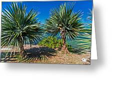 Palms On The Beach. Mauritius Greeting Card