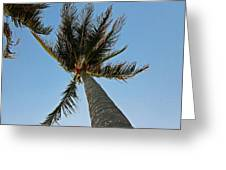 Palms Over My Head Greeting Card