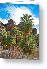 Palms Stand Tall In Andreas Canyon In Indian Canyons-ca Greeting Card