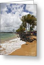 Palms Trees Along Luquillo Beach Greeting Card