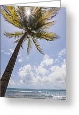 Palms Trees Along Luquillo Beach In Puerto Rico Greeting Card