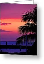 Palmtree At Sunset Greeting Card