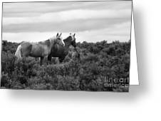 Palomino - Buttes - Wild Horses - Bw Greeting Card