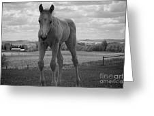 Palomino In Black And White Greeting Card