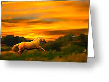 Palomino Pal At Sundown Greeting Card