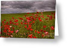 Palouse Poppies Greeting Card