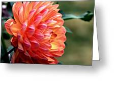 Pamela Howden Dahlia In Color Greeting Card