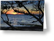 Pamlico Sound Through The Trees Greeting Card