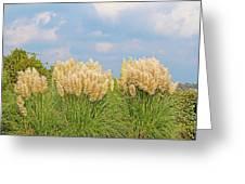 Pampas Grass Greeting Card
