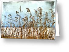 Pampas Grass Greeting Card by Dianne  Lacourciere