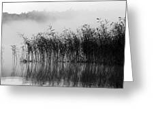 Pampas Grass In Fog Greeting Card