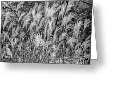 Pampas Grass Monochrome Greeting Card