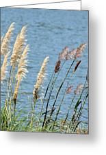 Pampas On The Lake Greeting Card