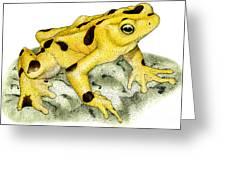 Panamanian Golden Frog Greeting Card