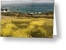 Panarama Spring On Califronia Coast By Denise Dube Greeting Card