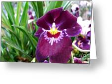 Pancy Orchid Greeting Card
