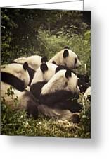 Pandamonium Greeting Card by Joan Carroll