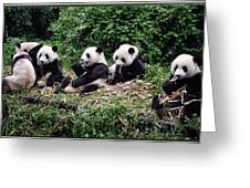 Pandas In China Greeting Card