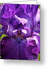 Pandora's Purple Greeting Card