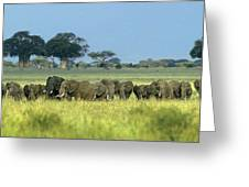 Panorama African Elephant Herd Endangered Species Tanzania Greeting Card