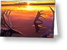 Panorama Caribou Antlers Whitefish Lake Nwt Canada Greeting Card