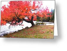 Panorama Of Red Maple Tree, Muskoka Greeting Card by Henry Lin
