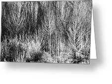Panorama Winter Trees B And W Greeting Card