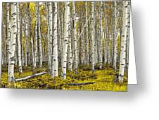 Panoramic Birch Tree Forest Greeting Card