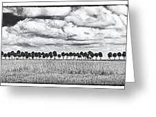 Panoramic Noir Greeting Card