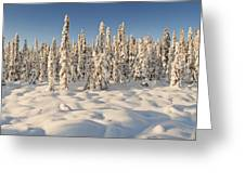Panoramic View Of Snow-covered Spruce Greeting Card