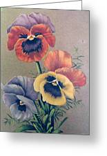 Pansies Bouquet Greeting Card