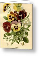 Pansies Greeting Card by Philip Ralley