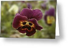 Pansy Beauty Photograph Greeting Card