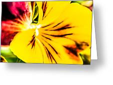 Pansy Flower 1 Greeting Card