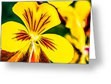 Pansy Flower 2 Greeting Card