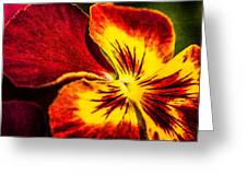 Pansy Flower 5 Greeting Card