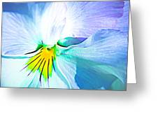 Pansy Flower 6 Greeting Card